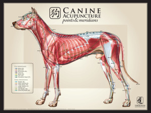 AcuPoster_Canine_LargeLat