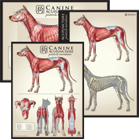 Acuposter_Canine_set