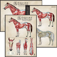 Acuposter_Equine_set