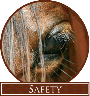 qc_safety
